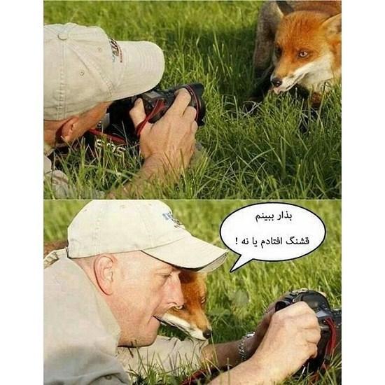 عکس های جالب از سوژه های خنده دار سری 14