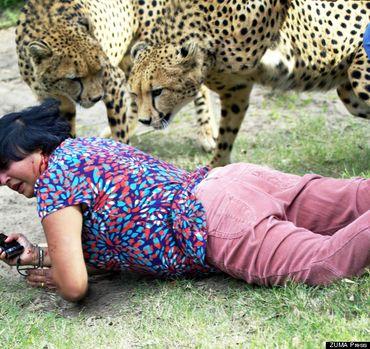 حمله دو یوزپلنگ به یک زن جوان تصاویر16