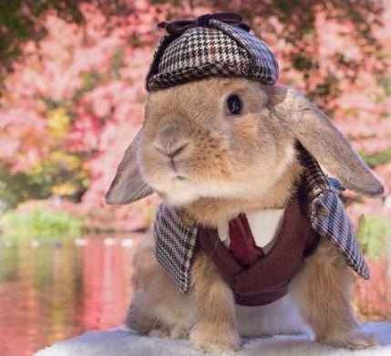 شیک ترین خرگوش دنیا در توکیو تصاویر