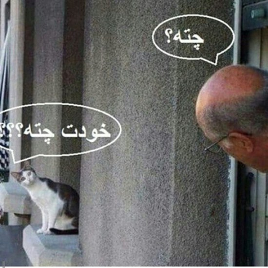 عکس های جالب از سوژه های خنده دار سری 16
