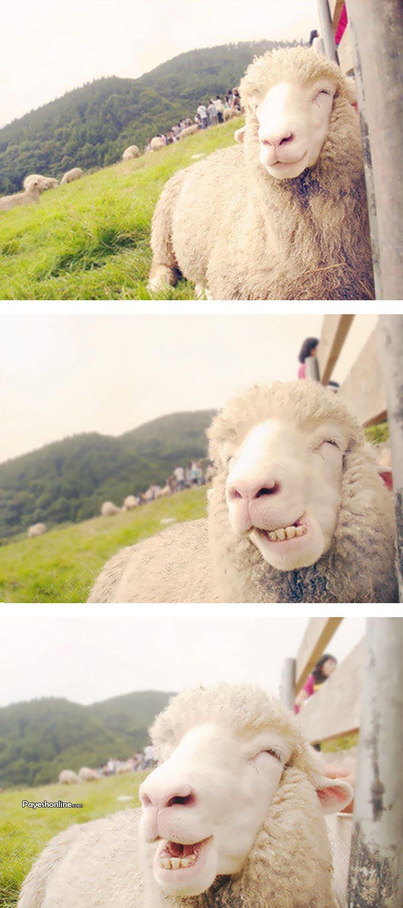 عکس های جالب از سوژه های خنده دار سری 181