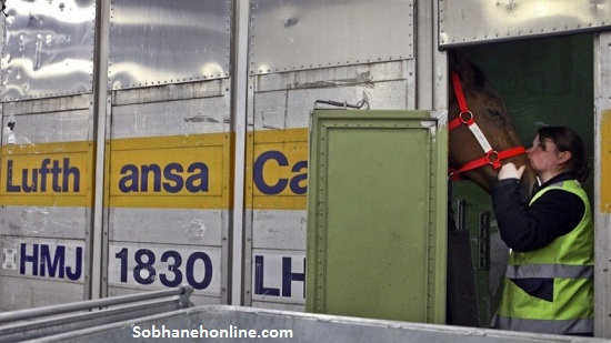 عکس : سفر 65 اسب با پرواز«فرست کلاس»به تهران و عجیبترین حمل و نقل هوایی جهان
