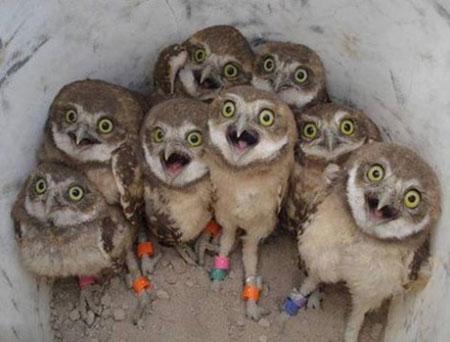 عکس های جالب از سوژه های خنده دار سری 165