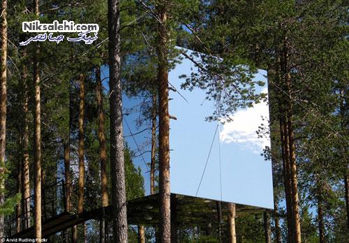 آیا می توانید خانه درختی نامرئی را در این تصاویر تشخیص دهید