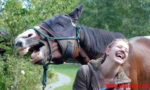 عکس های جالب از سوژه های خنده دار سری 175