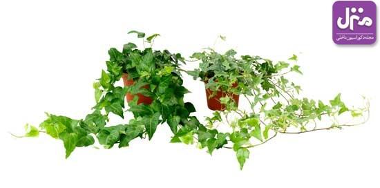 با گیاهان آسوده بخوابید