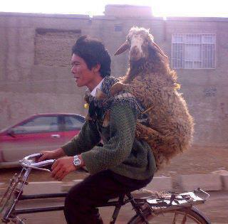 عکس های جالب از سوژه های خنده دار سری 170