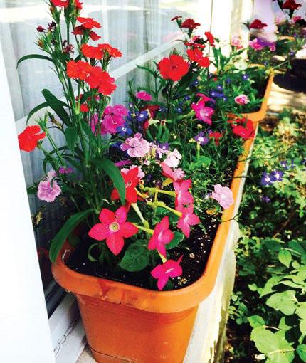 گل ها و زیبایی خیره کننده آنها بر دیوارساختمان ها