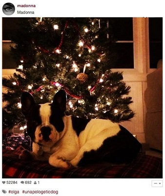 درخت کریسمس ستاره ها چه شکلیه؟ تصاویر