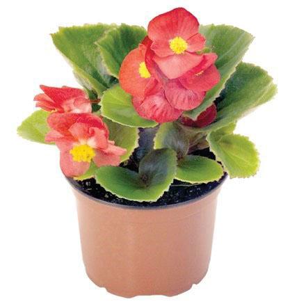کُنج آپارتمان تان را از این گلدانها پُر کنید