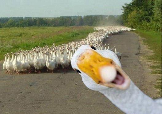 عکس های جالب از سوژه های خنده دار سری 161
