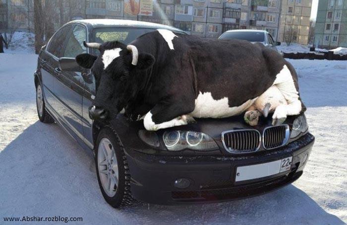 عکس های جالب از سوژه های خنده دار سری 179