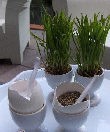 آموزش کاشت سبزه به شکل جاشمعی بسیار شیک برای نوروز ۹۵ عکس