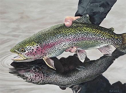 با این ترفند ها ماهی تازه را تشخیص دهید