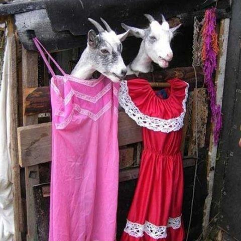 عکس های جالب از سوژه های خنده دار سری 39