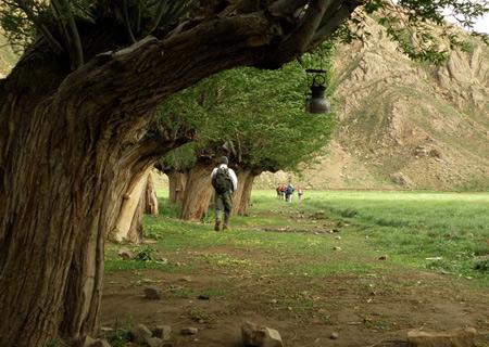 دشت هویج یکی از زیباترین جاذبههای روستای افجه تصاویر