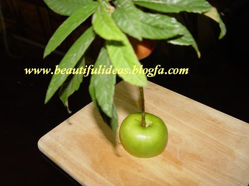 آموزش تصویری میوه آرایی بصورت درخت خرما تصاویر