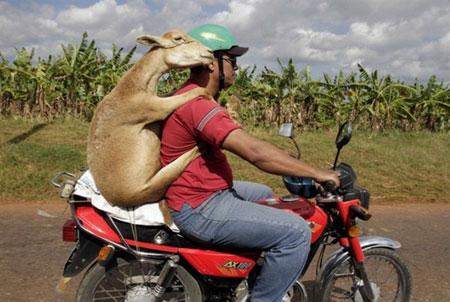 عکس های جالب از سوژه های خنده دار سری 81