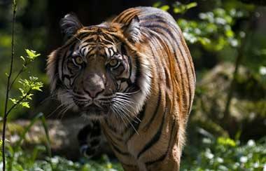 گشتی در باغ وحش تهران ( قسمت اول ) تصاویر