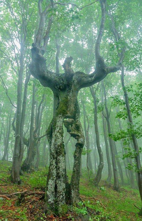 درختی جالب و عجیب شبیه انسان! عکس