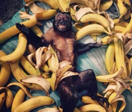 عکس های جالب از سوژه های خنده دار سری 155