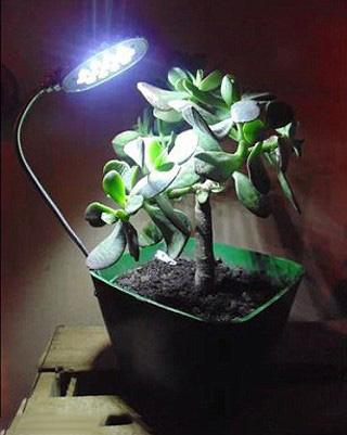 با خاک گیاهان موبایل خود راذ شارژ کنید!