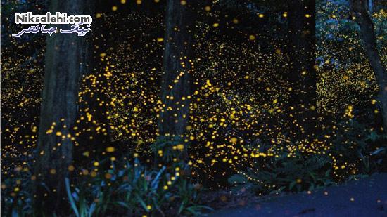 نمای خیال انگیز و جادویی پارک کرم شب تاب