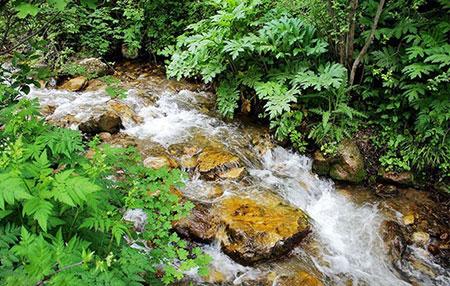 جنگل ارسباران در دل طبیعت بکر آذربایجان