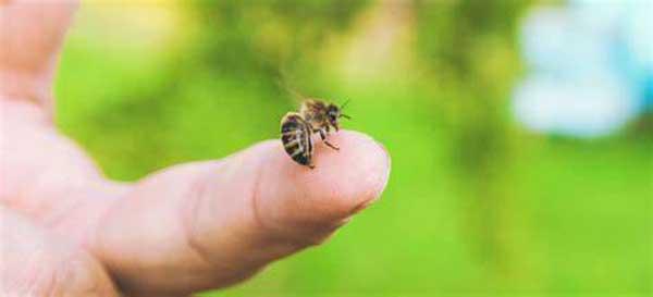 نیش زنبور عسل در درمان انواع بیماری ها