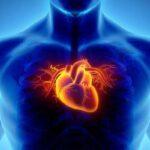 کسانی که قلب آنها طرف راستشان است