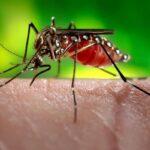 ۱۰ روش طبیعی برای مقابله با پشه