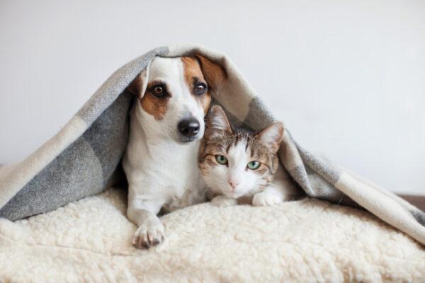 انتقال بیماری از سگ به انسان