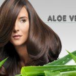آلوئه ورا باعث رویش موها می شود+ طریقه مصرف