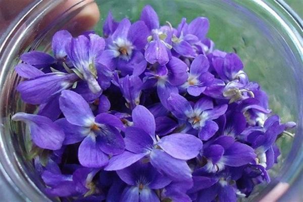 گل بنفشه تسکیندهنده علائم سرماخوردگی است