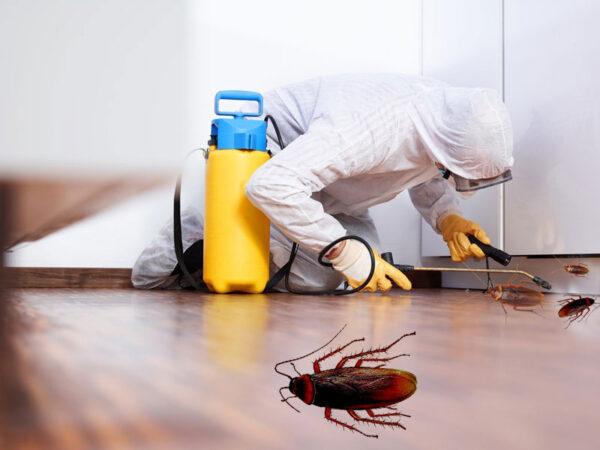 مبارزه با سوسک خانگی