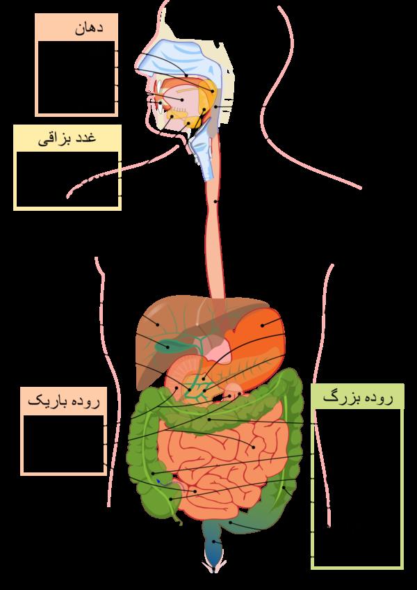 کالبد شکافی بدن