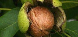 موهای زائد را با پوست گردو از بین ببرید