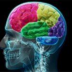 خشکی در مغز نشانه چیست؟