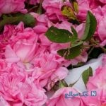 با خواص درمانی و بی نظیر چای گل سرخ آشنا شوید
