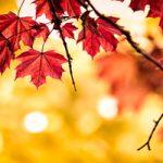 مهم ترین بیماری های فصل پاییز