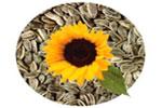۵ دانهی سالمی که هر روز باید مصرف کنید