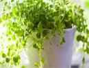 اگر افسرده اید به گل و گیاه نگاه کنید!