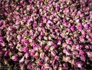 درمان آلزایمر با استفاده از پودر گل سرخ در غذا / درمان در طول سه هفته
