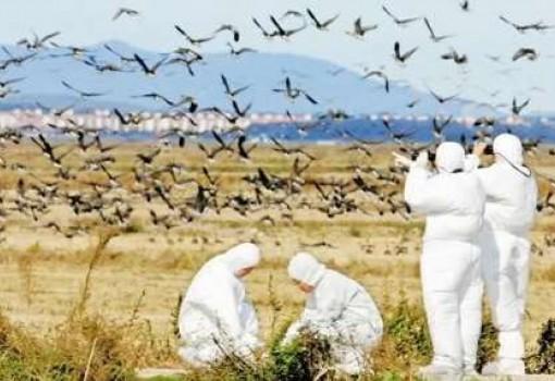 علائم آنفلوآنزای پرندگان