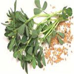 بیماران کبدی از مصرف این گیاه خودداری کنند