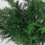 با ۳ معجزهگر گیاهی برای درمان «کولیت» آشنا شوید