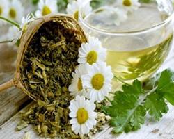بهترین گیاهان دارویی برای سرکوب اشتها