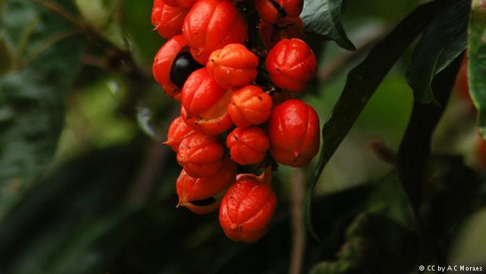 مفیدترین گیاهان دارویی