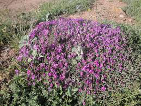 گیاهان مفید برای کبد