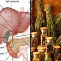 با این ۱۰ گیاه بیماری از چند فرسخی کبد شما هم رد نخواهد شد